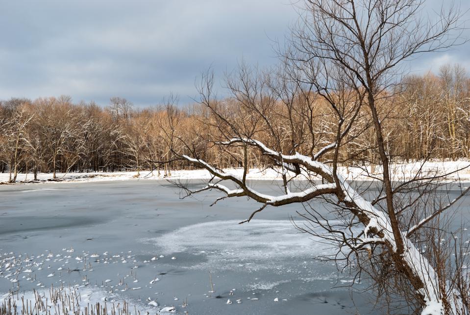 Winter scenic in forest preserve