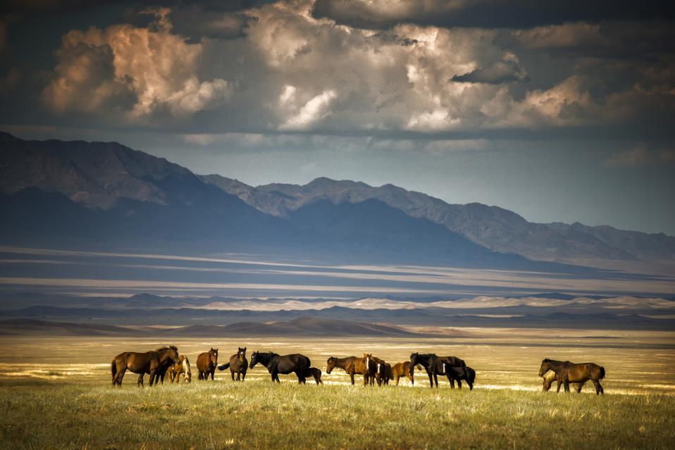 Kazakhstan steppe horses travel tourism