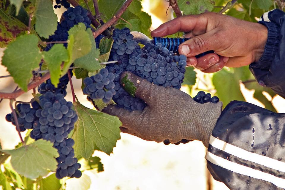 California Wine Industry in Sonoma
