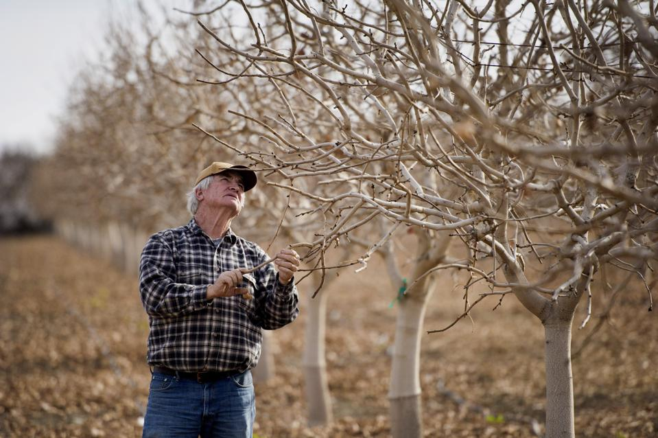 Trump Administration To Divert More Of California's Water To Farming, Impacting Power Production And Wildlife