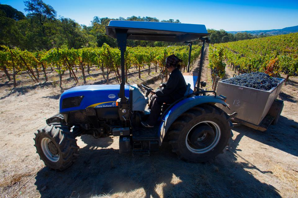 Operations During A Harvest At The St. Francis Winery & Vineyards, Sonoma wine
