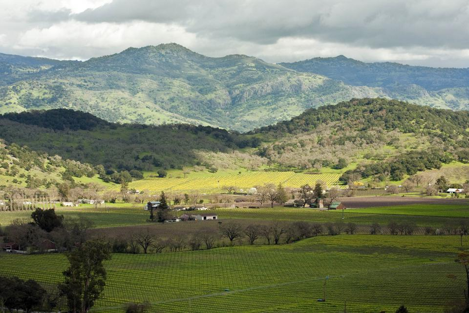 A vineyard at Harlan Estate Winery in Napa Valley, California