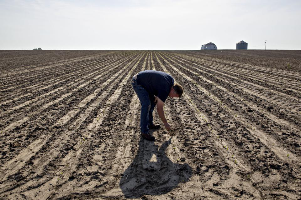 China's Sanctions Against U.S. Farmers May Be Everlasting