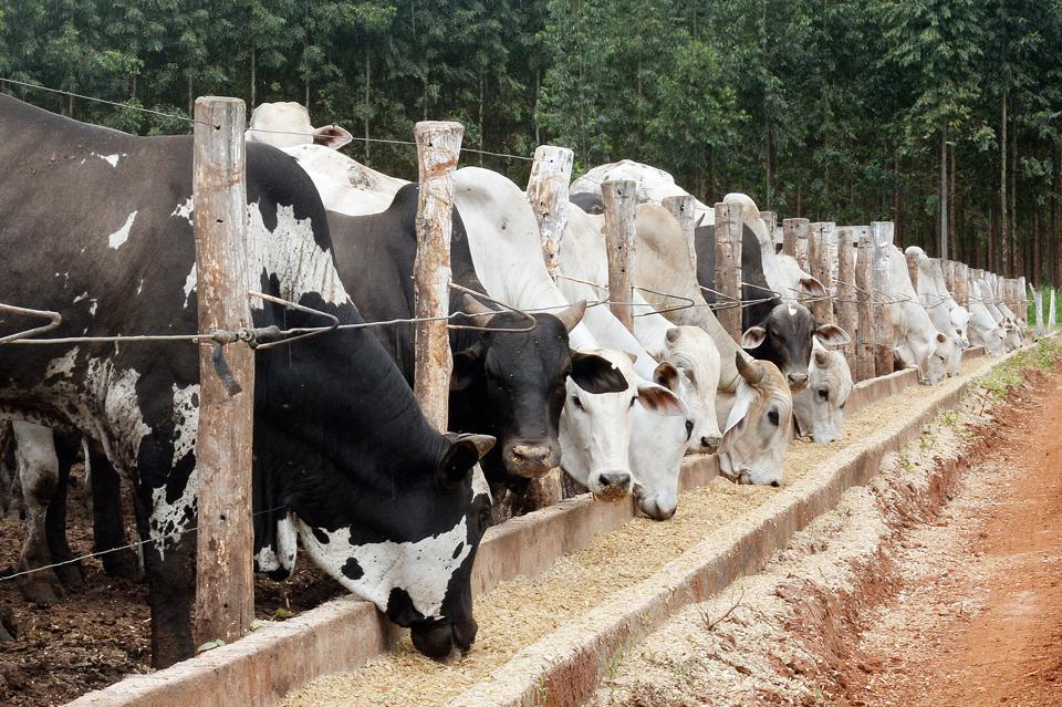 BRAZIL-AGRICULTURE-CARBON EMISSION