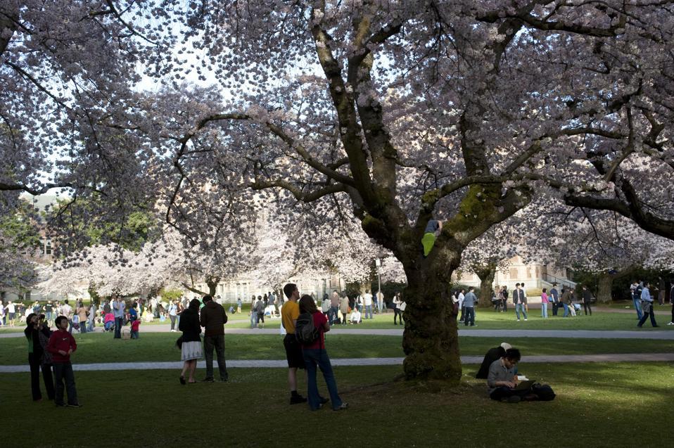 USA, Washington State, Seattle, University Of Washington...
