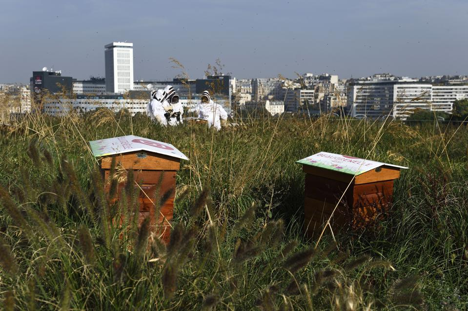 FRANCE-APICULTURE