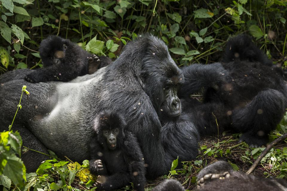 Oil Exploratin Threatens Virunga National Park