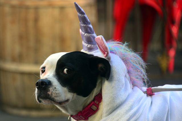Why So Many Billion-Dollar Unicorn Startups? VCs Tell All