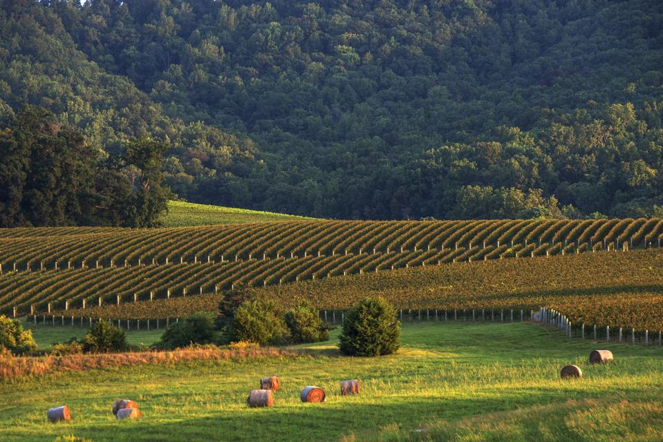 Virginia's Wine Country