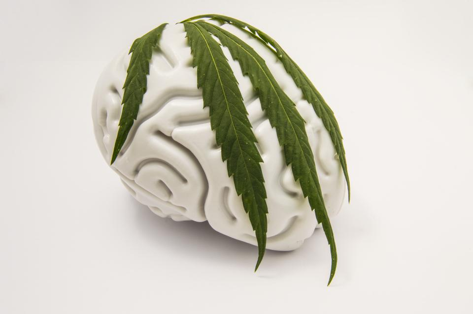 Daily Dose Of Cannabis May Protect And Heal The Brain From Effects Of Aging