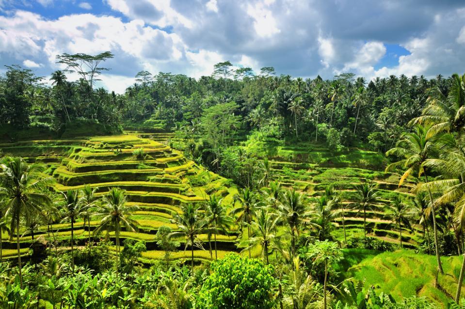 The Best Luxury Villas In Ubud