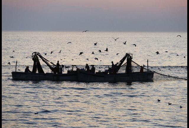 Chesapeake Bay Total Maximum Daily Load (TMDL)