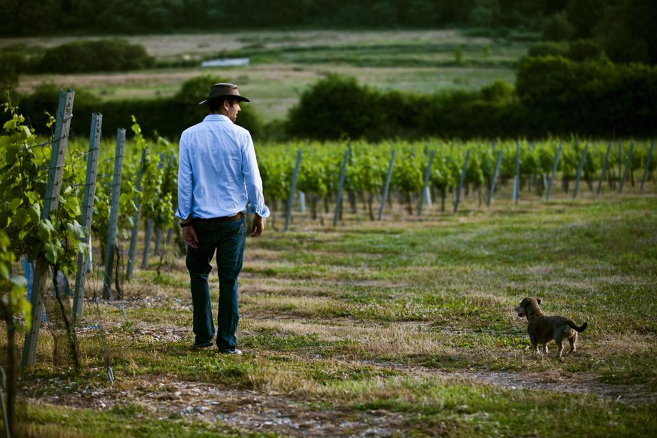 Man and dog at vineyard.