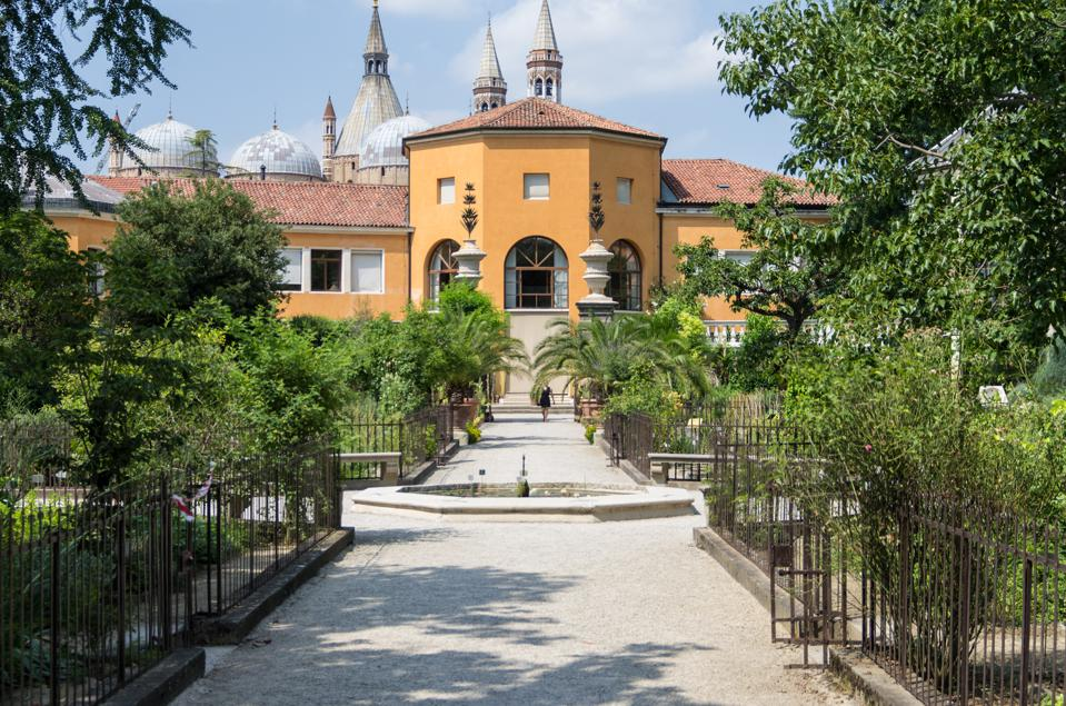 Botanical garden, Orto Botanico di Padova The garden, affiliated with the University of Padua