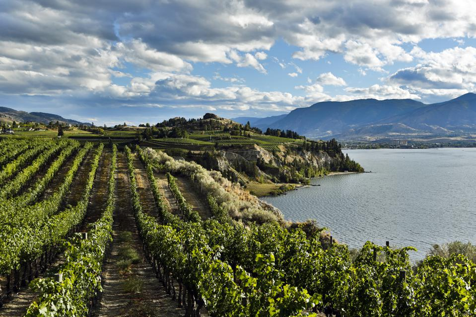 Naramata Vineyard Okanagan Valley