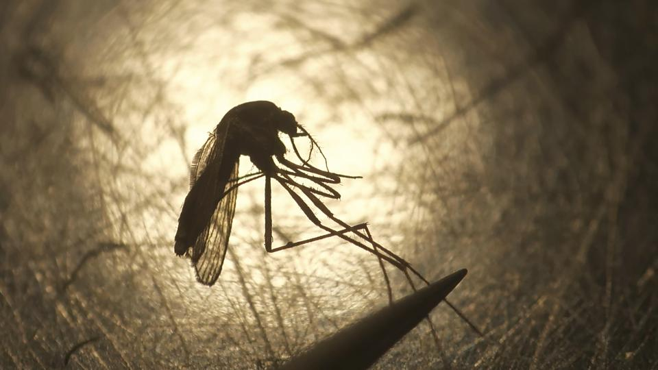 7 Now Dead From EEE, What Is The Latest On This Mosquito-Borne Disease
