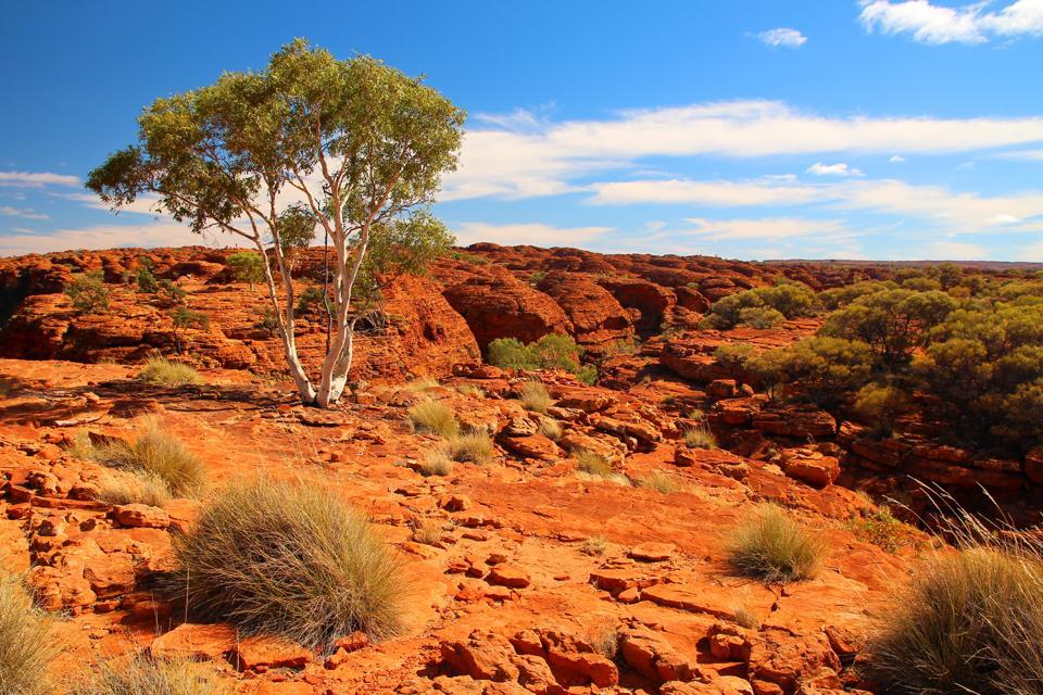 Kings Canyon, Australian Outback