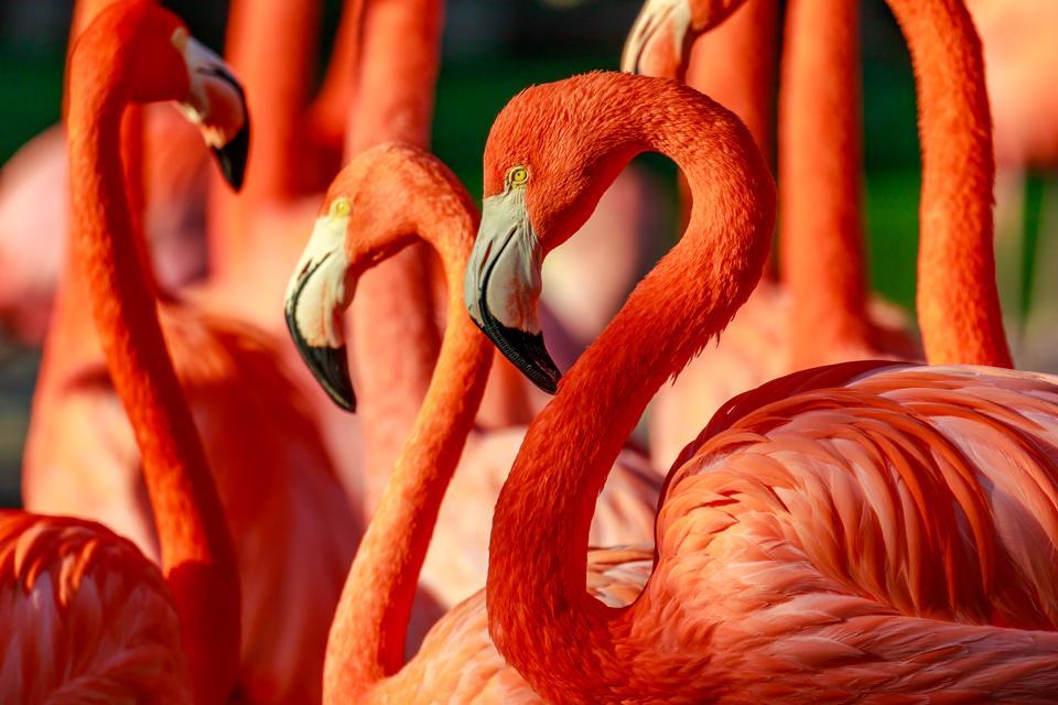 The Best Hotels Near San Diego Zoo