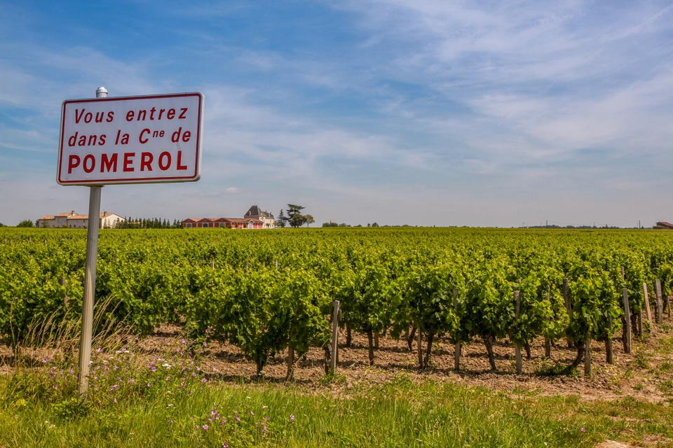 Pomerol vineyard
