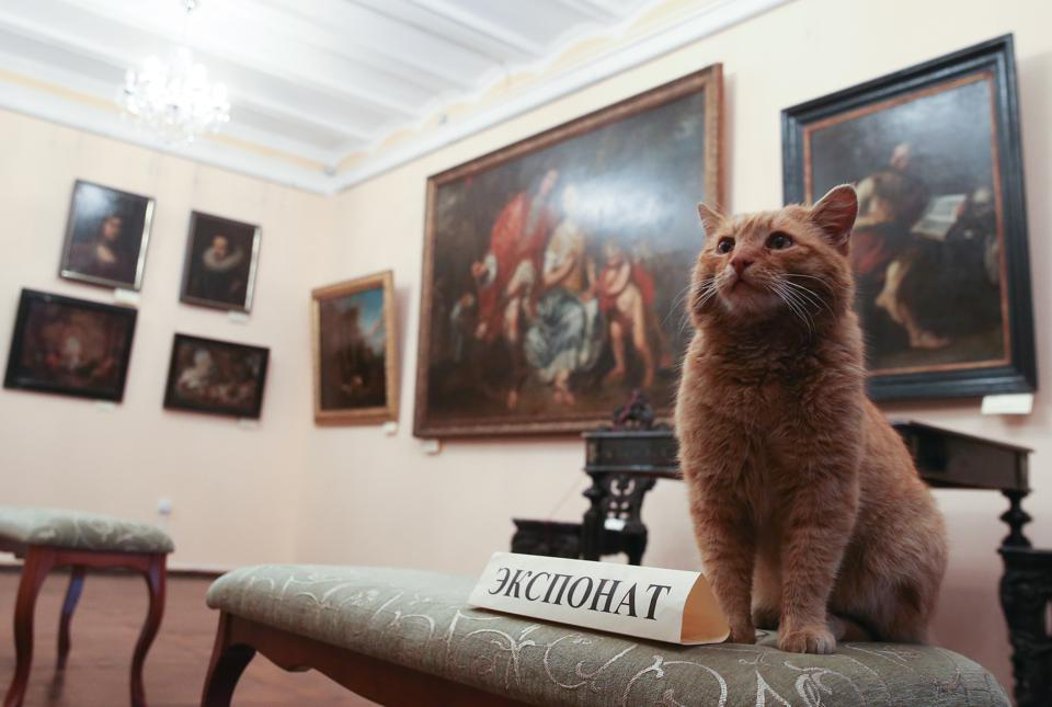 Serpukhov History and Art Museum hires cat as porter