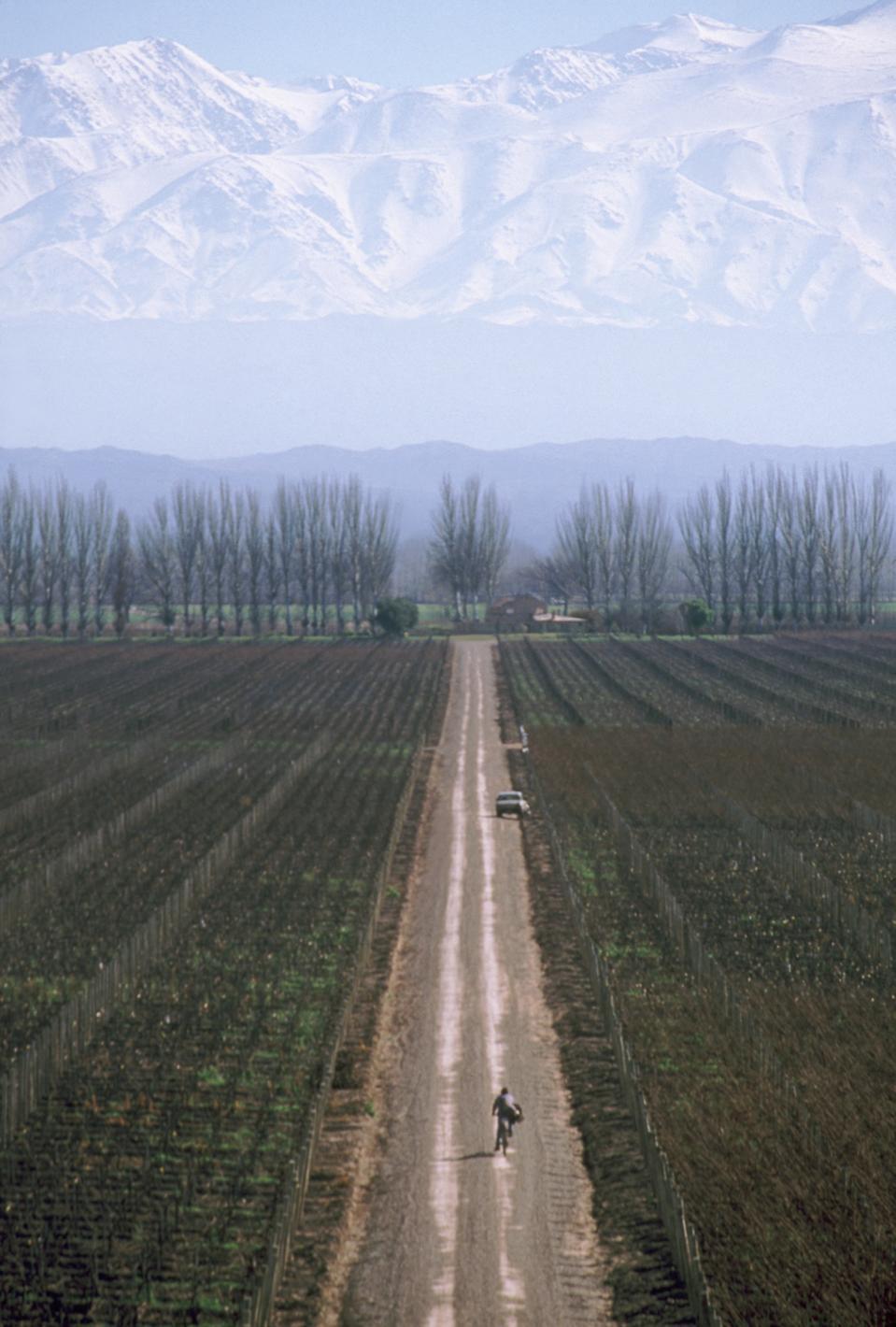 Catena Zapata vineyards - Argentina