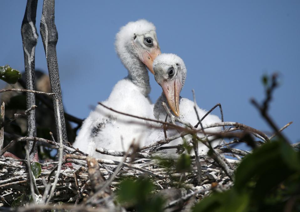 US-ENVIROMENT-ANIMAL-BIRDS