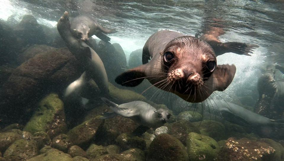 Close up of a sea lion in Galapagos Islands