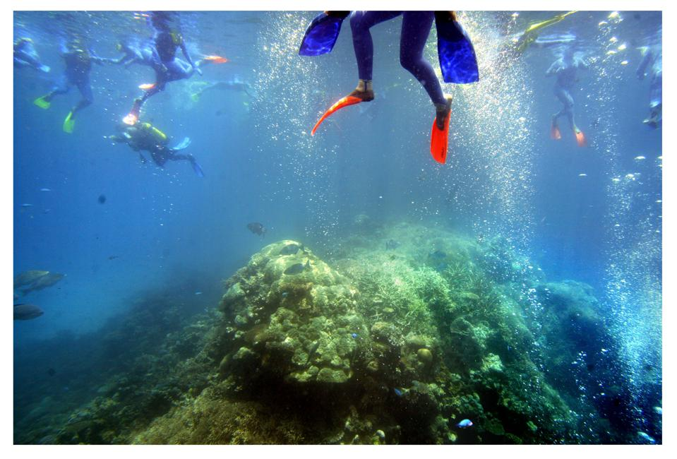 Great Barrier Reef climate change disaster Queensland Australia coral bleaching