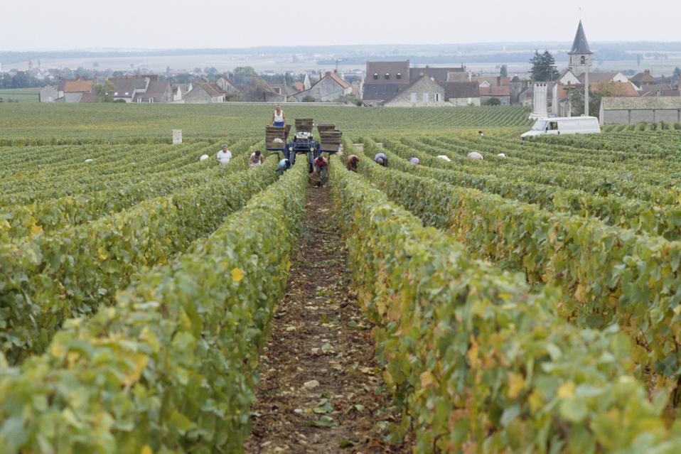 Domaine de Romanée Conti vineyard