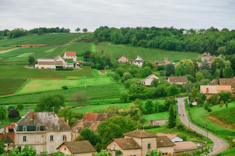 understanding French wine, Burgundy vineyards