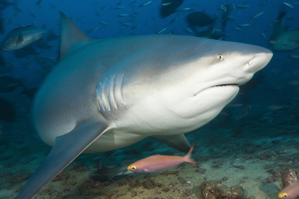 Climate Change Is Already Impacting Sharks