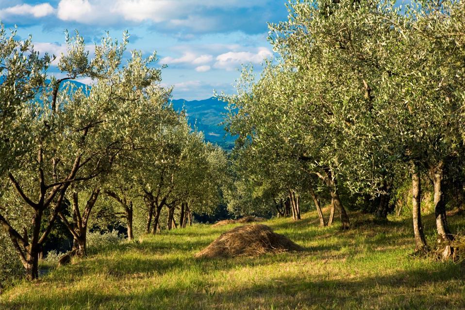 Borgo San Lorenzo. Mugello. Tuscany. Italy