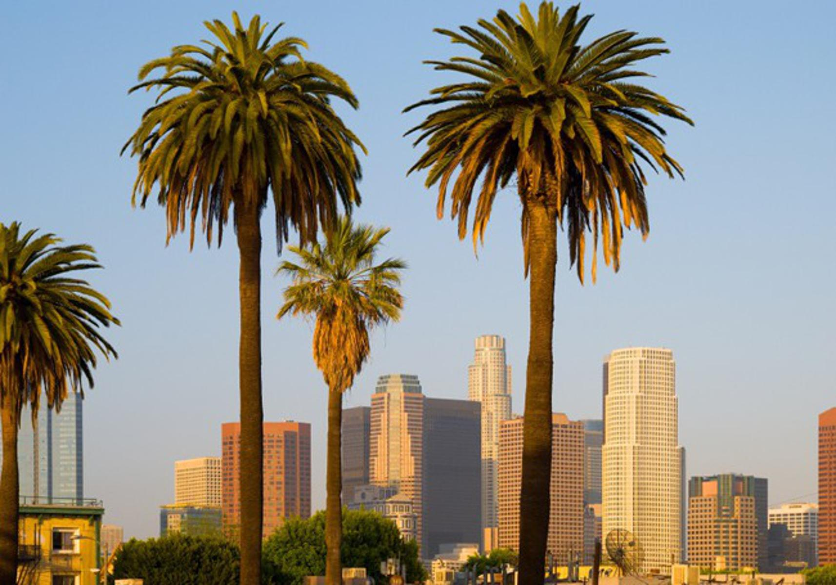 Image result for los angeles with palm trees