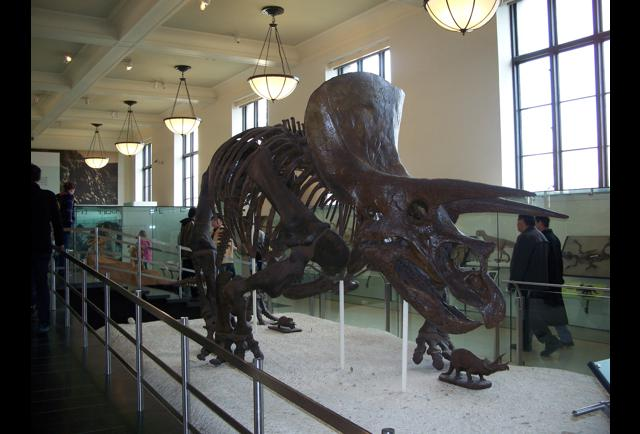 History Of The Museum Of Natural History In New York