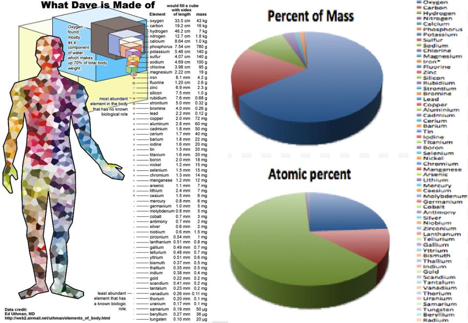 The composition of the human body, by atomic number and by mass.