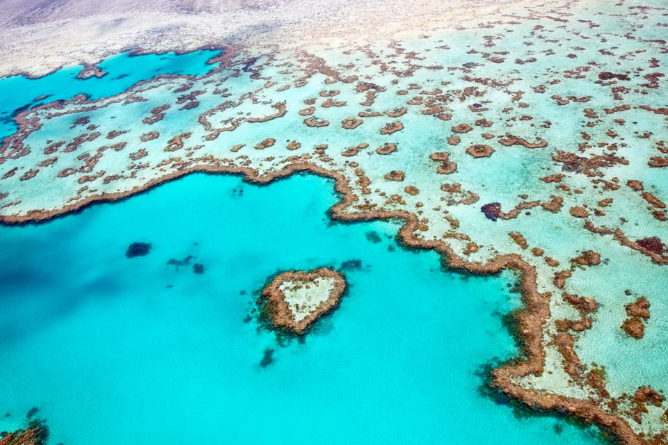The Great Barrier Reef Is In Its Final 'Terminal Stage'