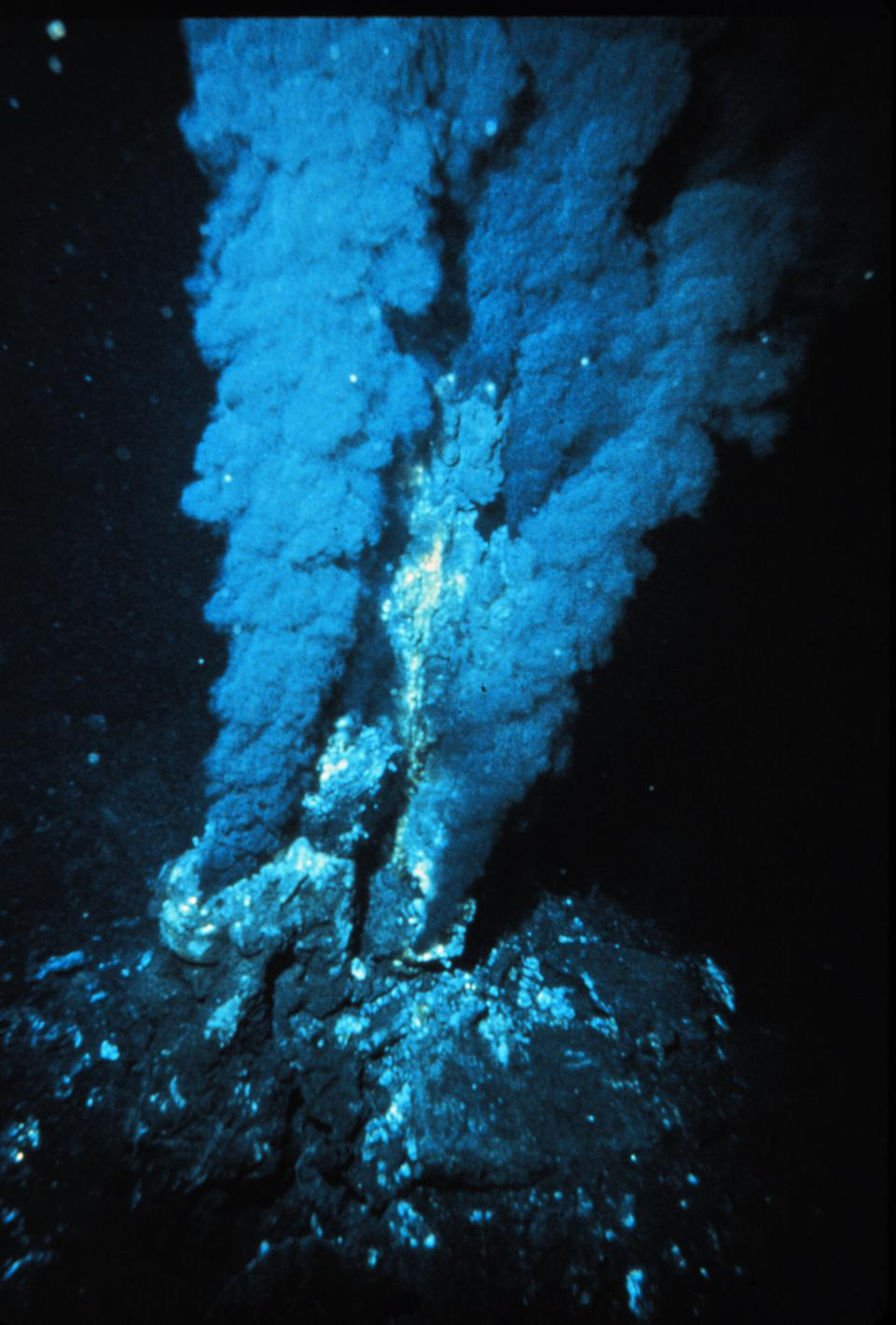 Hydrothermal vents along mid-ocean ridges house extremophile life forms.