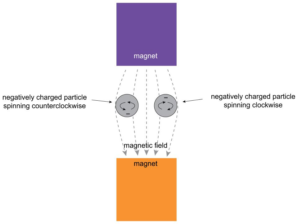 Electrons, like all fermions, have two orientations when placed in a magnetic field.