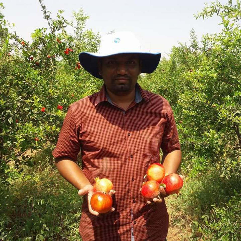 Farmer Tushar Kamble, 38, holding pomegranates that he grows on the same farm as his chillies.