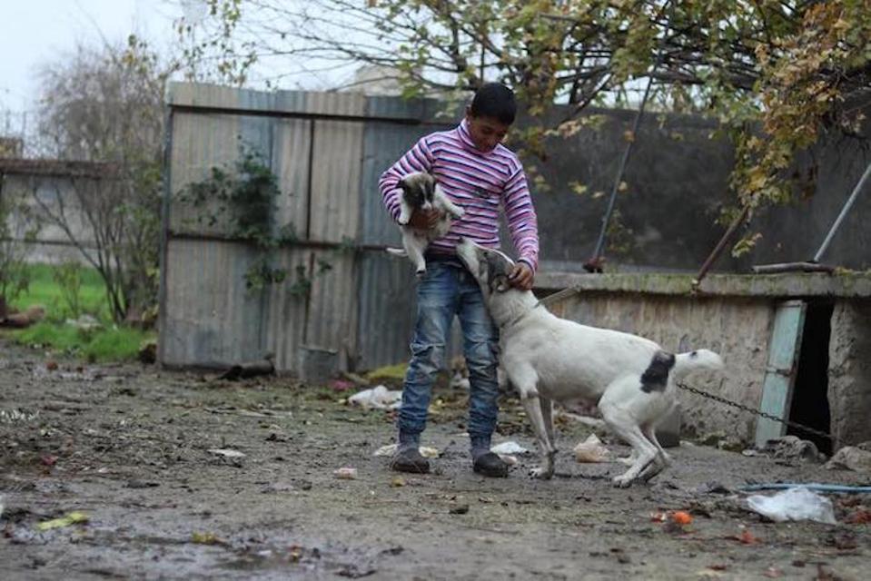 Di lingkungan yang jarang penduduknya, anjing keluarga adalah pelindung yang berharga.