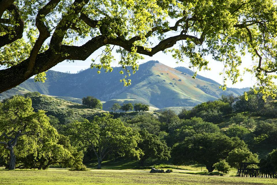 Neverland Ranch land