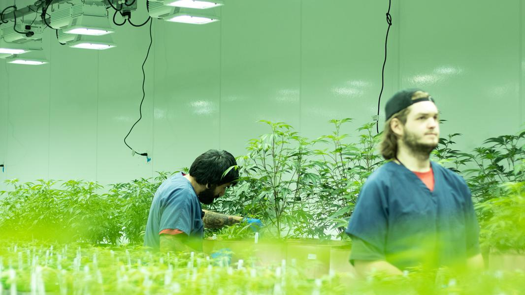 Grassroots Cannabis Raises $90 Million To Continue Blooming As Multi-State Operator