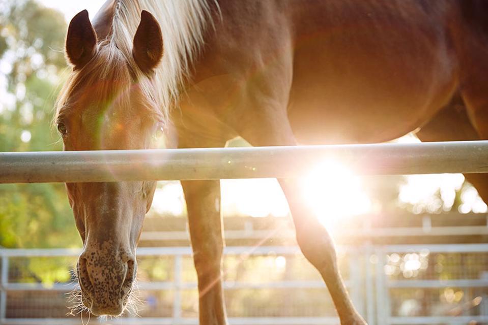 Levi & Friends - Equine Therapists