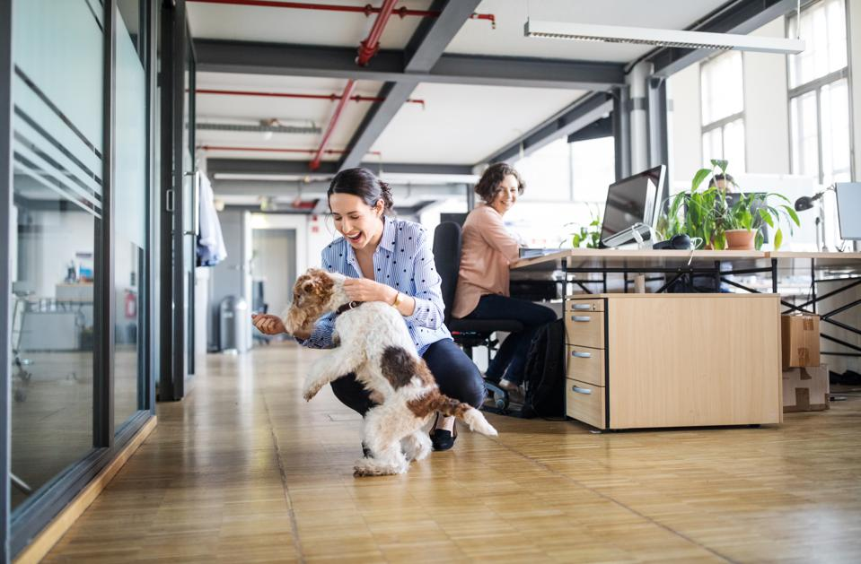 Businesswoman playing with dog at creative office