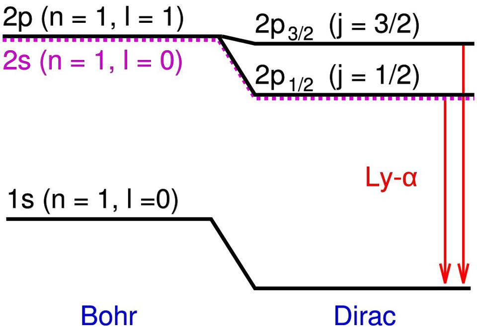 The difference between the Bohr and the Dirac model shows up in additional energy levels.