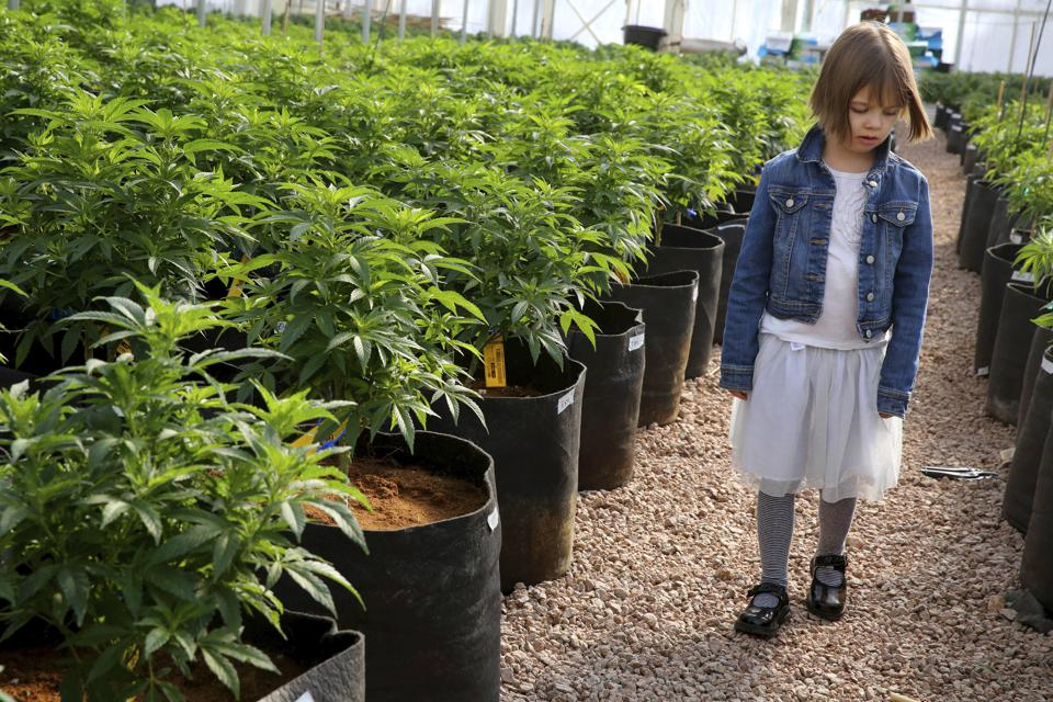 Charlotte Figi, cannabis community, medical marijuana, CBD, CBD benefits, Charlotte's Web