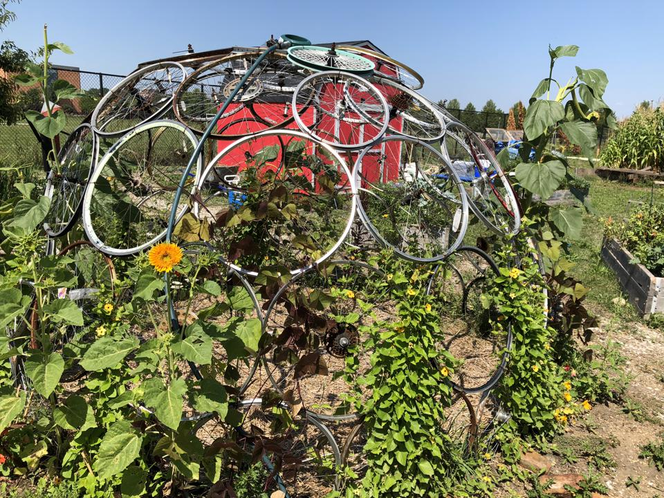 The Prosser Community Garden (PCG) embraces two acres of what Chicago Public School high school biology teacher Marnie Ware calls a living experiment in community and urban agriculture.