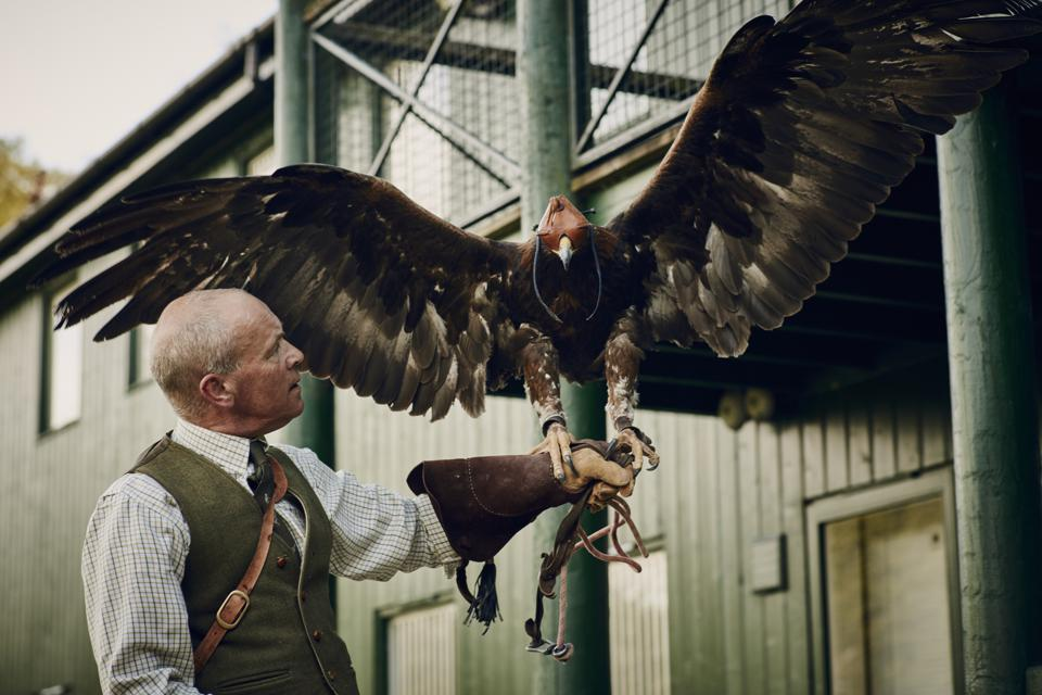 Gleneagles is home to the British School of Falconry.