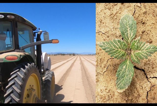 Hemp, Meet Large-Scale Agriculture, Large-Scale Agriculture, Meet Hemp
