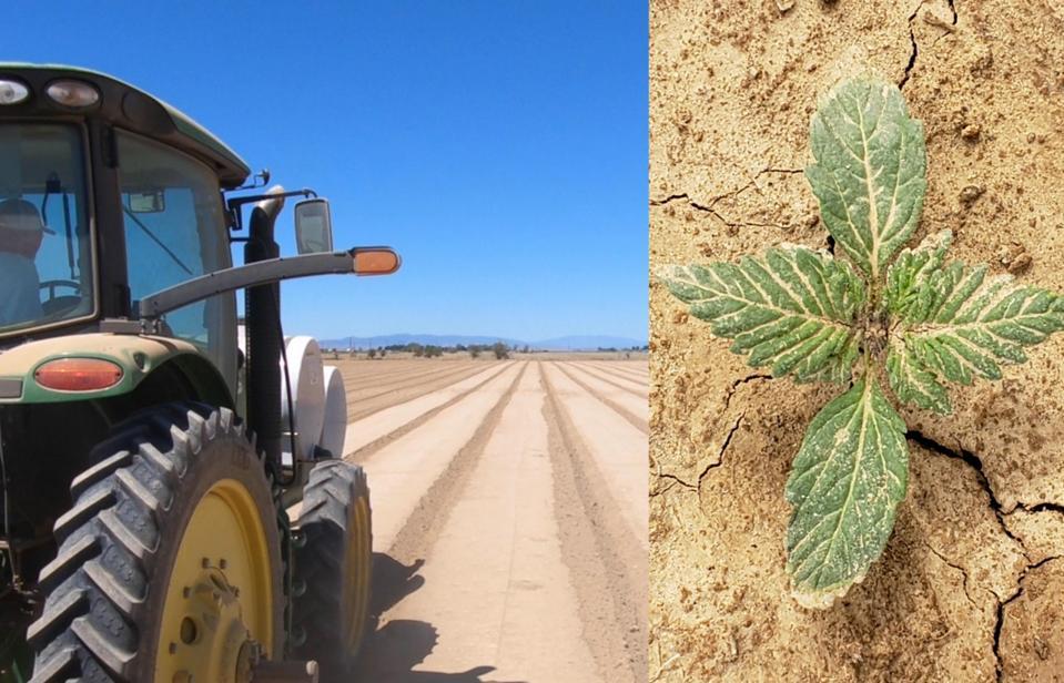 D'anciennes fermes d'oignon et de luzerne reconverties pour la culture du chanvre à Lancaster, en Californie, dans la vallée de l'Antilope.